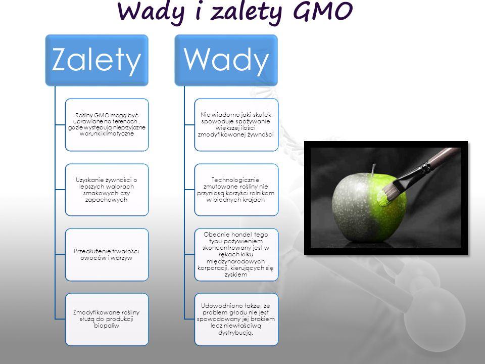 Wady i zalety GMO Zalety Rośliny GMO mogą być uprawiane na terenach, gdzie występują nieprzyjazne warunki klimatyczne Uzyskanie żywności o lepszych wa