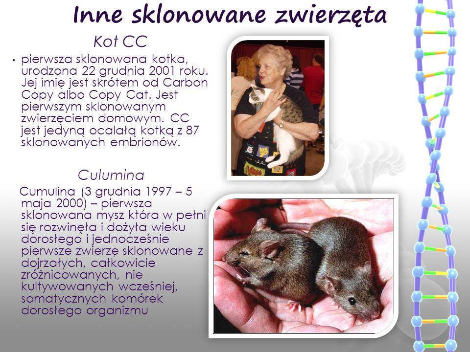 pierwsza sklonowana kotka, urodzona 22 grudnia 2001 roku. Jej imię jest skrótem od Carbon Copy albo Copy Cat. Jest pierwszym sklonowanym zwierzęciem d