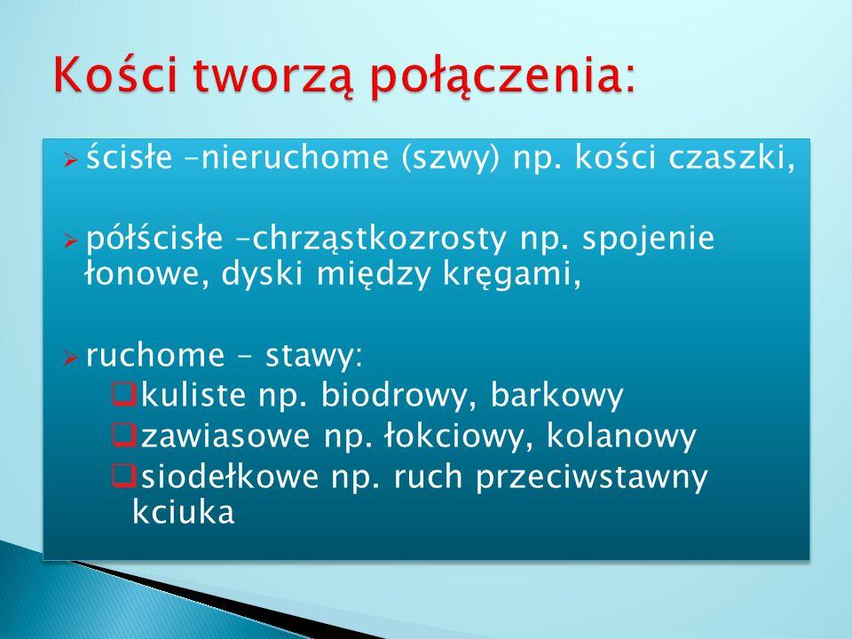 Obręczy miednicowej składającej się z kości: biodrowych (2), łonowych (2), kulszowych (2), kości krzyżowej Części wolnej składającej się z kości: udow
