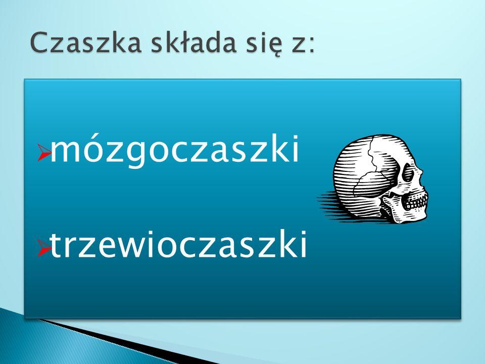 1.Szkielet osiowy, który stanowi: Czaszka Kręgosłup Klatka piersiowa (żebra, mostek) 2. Szkielet kończyn górnych i dolnych 1.Szkielet osiowy, który st