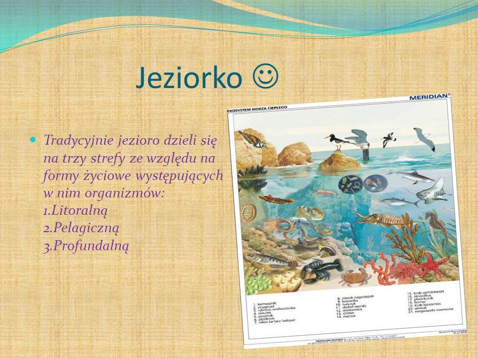 Jeziorko Tradycyjnie jezioro dzieli się na trzy strefy ze względu na formy życiowe występujących w nim organizmów: 1.Litoralną 2.Pelagiczną 3.Profundalną
