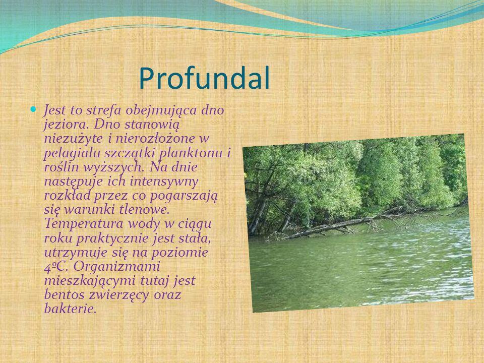 Profundal Jest to strefa obejmująca dno jeziora. Dno stanowią niezużyte i nierozłożone w pelagialu szczątki planktonu i roślin wyższych. Na dnie nastę