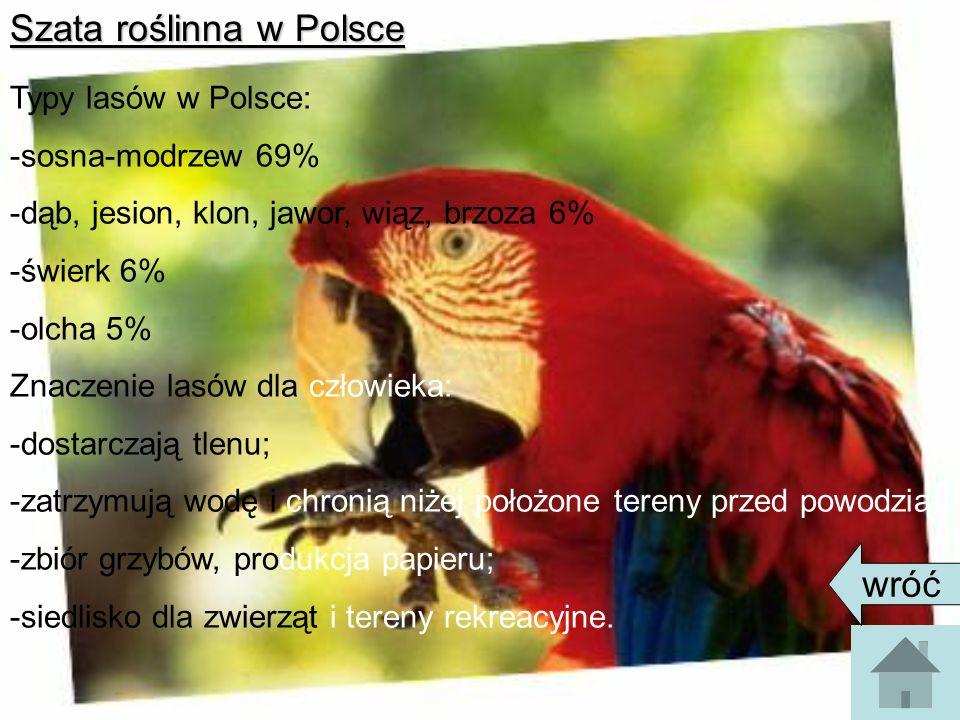 Szata roślinna w Polsce Typy lasów w Polsce: -sosna-modrzew 69% -dąb, jesion, klon, jawor, wiąz, brzoza 6% -świerk 6% -olcha 5% Znaczenie lasów dla cz