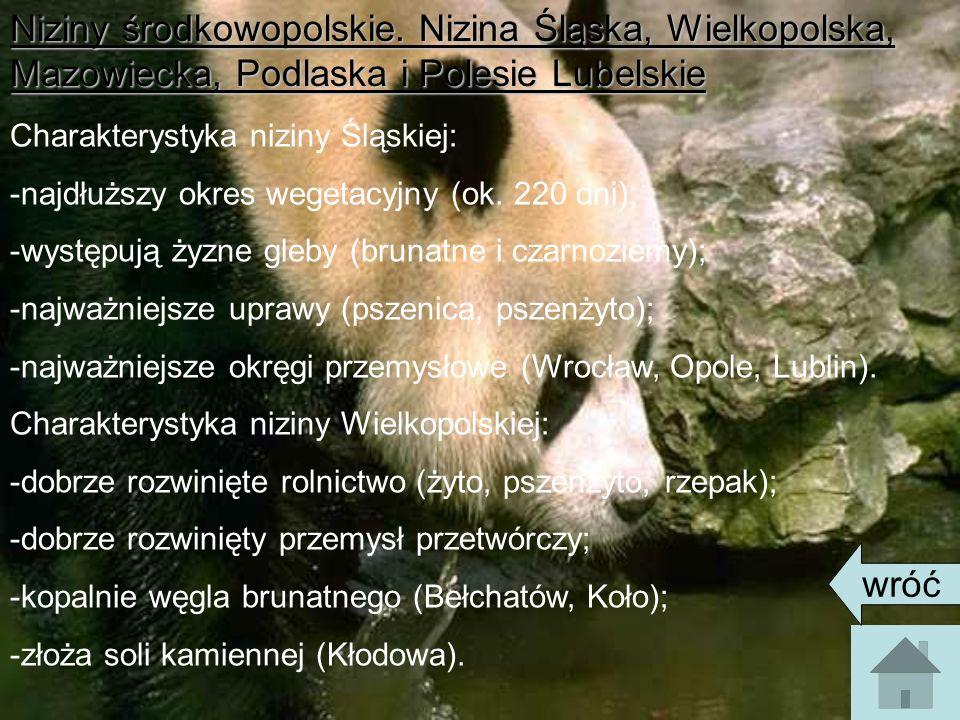 Niziny środkowopolskie. Nizina Śląska, Wielkopolska, Mazowiecka, Podlaska i Polesie Lubelskie Charakterystyka niziny Śląskiej: -najdłuższy okres weget