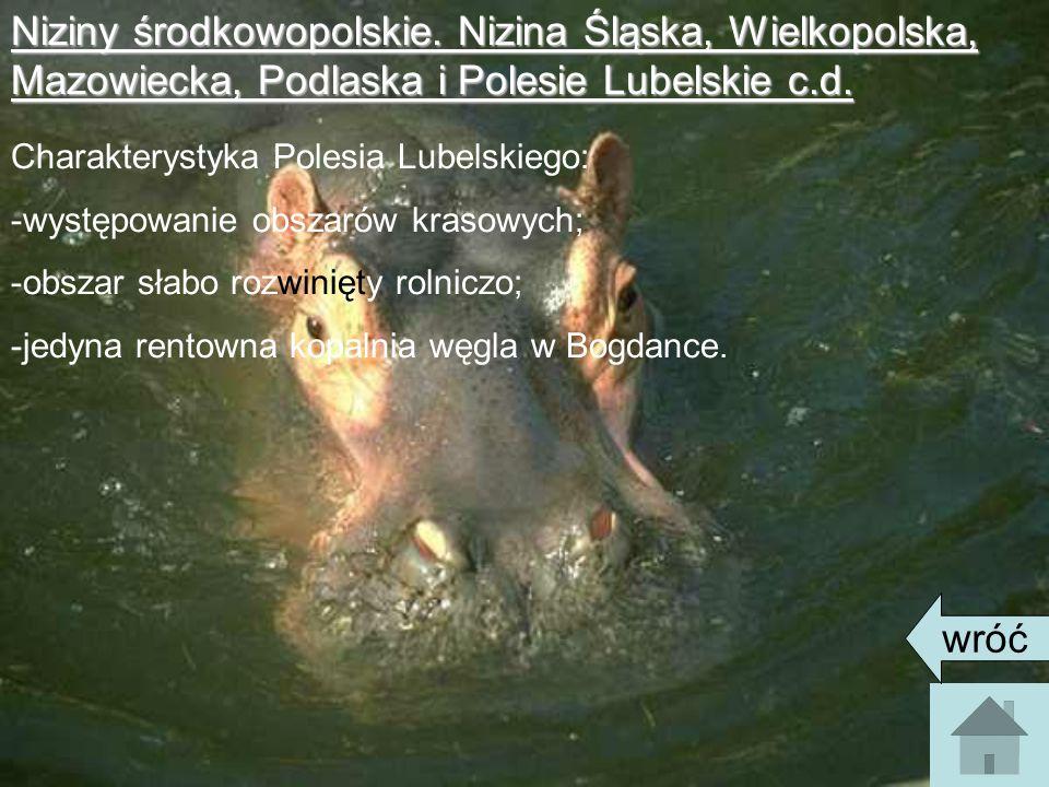 Niziny środkowopolskie.Nizina Śląska, Wielkopolska, Mazowiecka, Podlaska i Polesie Lubelskie c.d.