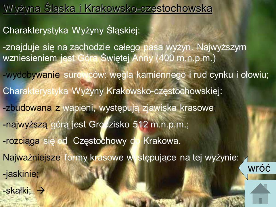Wyżyna Śląska i Krakowsko-częstochowska Charakterystyka Wyżyny Śląskiej: -znajduje się na zachodzie całego pasa wyżyn.