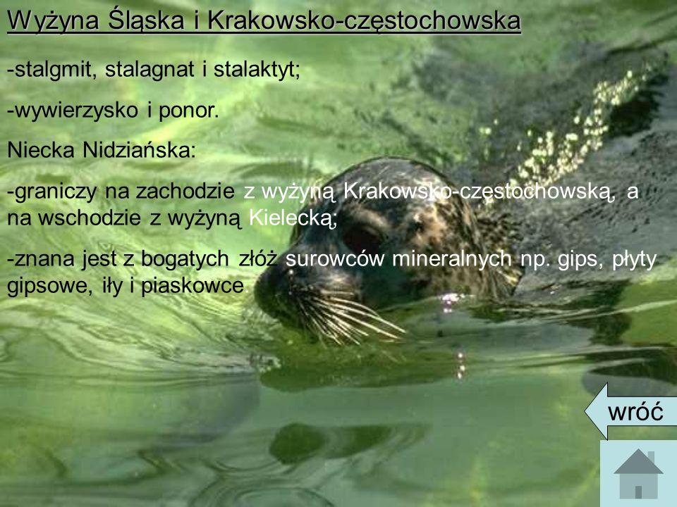 Wyżyna Śląska i Krakowsko-częstochowska -stalgmit, stalagnat i stalaktyt; -wywierzysko i ponor. Niecka Nidziańska: -graniczy na zachodzie z wyżyną Kra