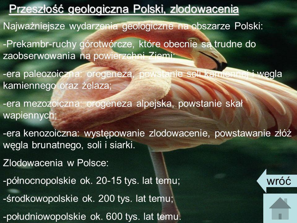 Przeszłość geologiczna Polski, zlodowacenia Najważniejsze wydarzenia geologiczne na obszarze Polski: -Prekambr-ruchy górotwórcze, które obecnie są trudne do zaobserwowania na powierzchni Ziemi; -era paleozoiczna: orogeneza, powstanie soli kamiennej i węgla kamiennego oraz żelaza; -era mezozoiczna: orogeneza alpejska, powstanie skał wapiennych; -era kenozoiczna: występowanie zlodowacenie, powstawanie złóż węgla brunatnego, soli i siarki.
