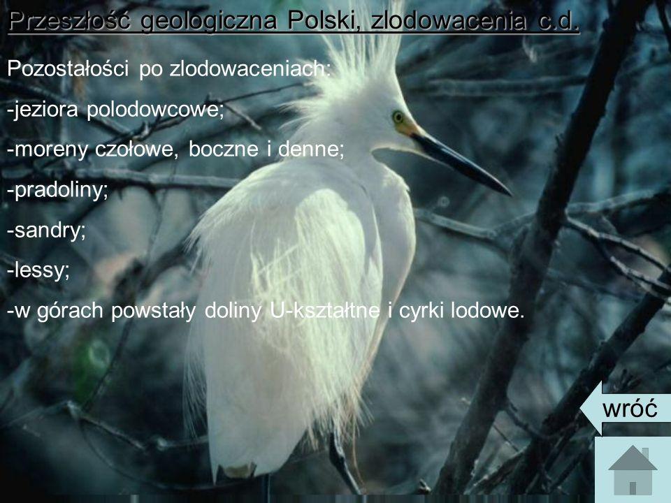 Przeszłość geologiczna Polski, zlodowacenia c.d. Pozostałości po zlodowaceniach: -jeziora polodowcowe; -moreny czołowe, boczne i denne; -pradoliny; -s