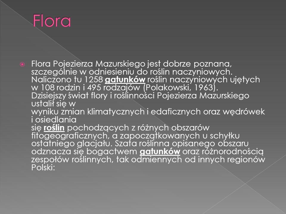 Flora Pojezierza Mazurskiego jest dobrze poznana, szczególnie w odniesieniu do roślin naczyniowych. Naliczono tu 1258 gatunków roślin naczyniowych uję