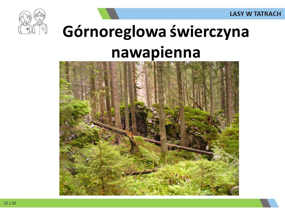 Górnoreglowa świerczyna nawapienna LASY W TATRACH 15 z 20