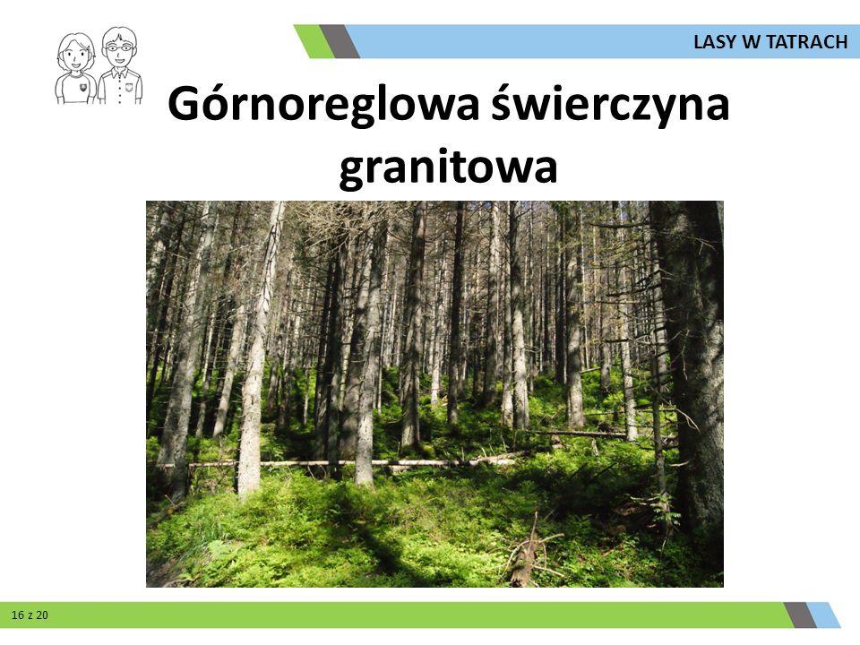Górnoreglowa świerczyna granitowa LASY W TATRACH 16 z 20