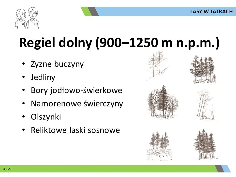 Regiel górny (900–1250 m n.p.m.) Królestwo świerka Świerczyna karpacka (granit) Świerczyna nawapiennaBór świerkowo-limbowy LASY W TATRACH 14 z 20