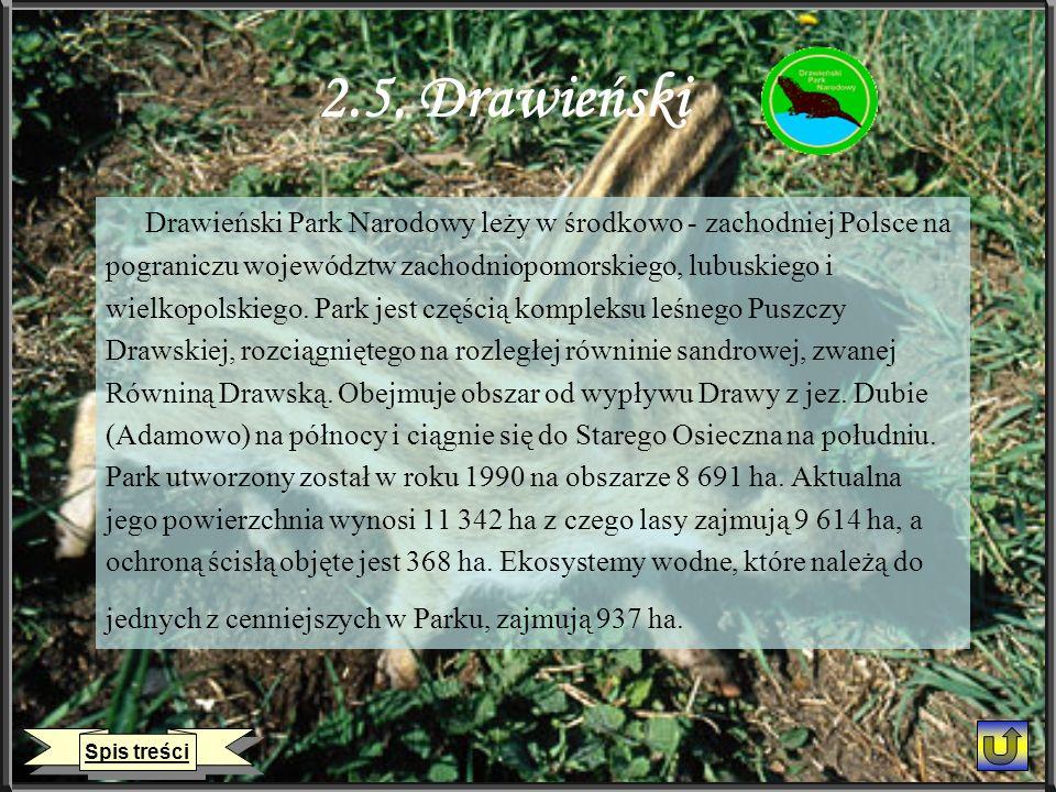 2.5. Drawieński Drawieński Park Narodowy leży w środkowo - zachodniej Polsce na pograniczu województw zachodniopomorskiego, lubuskiego i wielkopolskie