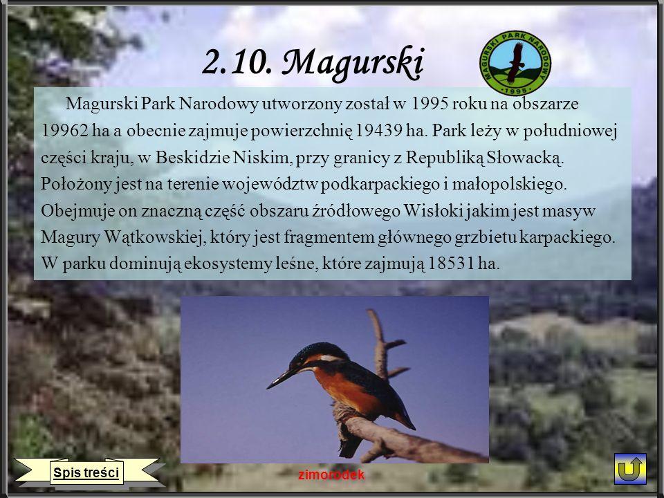 2.10. Magurski Magurski Park Narodowy utworzony został w 1995 roku na obszarze 19962 ha a obecnie zajmuje powierzchnię 19439 ha. Park leży w południow