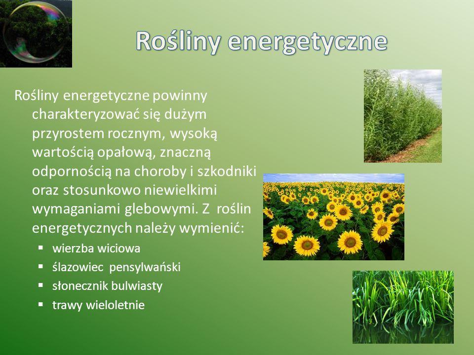 Rośliny energetyczne powinny charakteryzować się dużym przyrostem rocznym, wysoką wartością opałową, znaczną odpornością na choroby i szkodniki oraz s