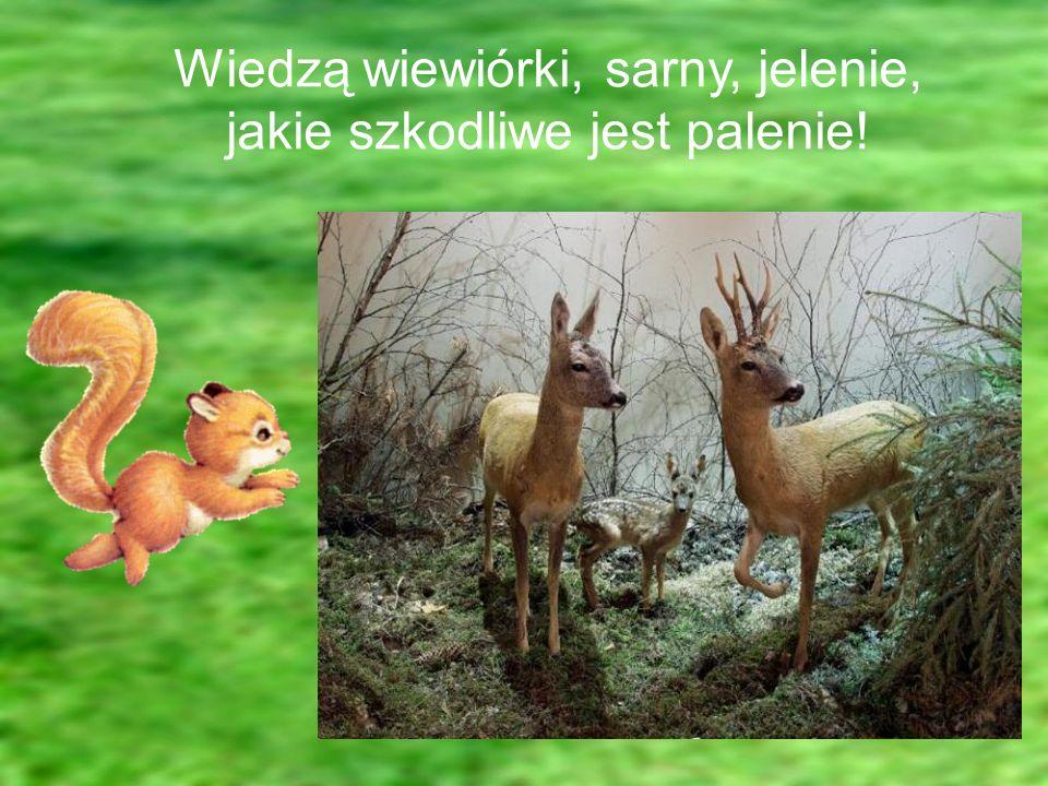 Wiedzą wiewiórki, sarny, jelenie, jakie szkodliwe jest palenie!