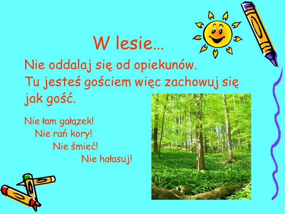 W lesie… Nie oddalaj się od opiekunów. Tu jesteś gościem więc zachowuj się jak gość. Nie łam gałązek! Nie rań kory! Nie śmieć! Nie hałasuj!