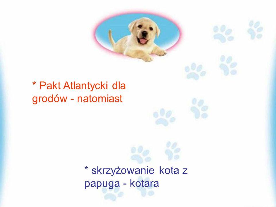 * Pakt Atlantycki dla grodów - natomiast * skrzyżowanie kota z papuga - kotara