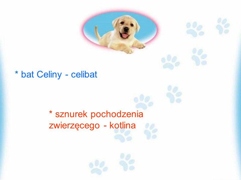 * bat Celiny - celibat * sznurek pochodzenia zwierzęcego - kotlina