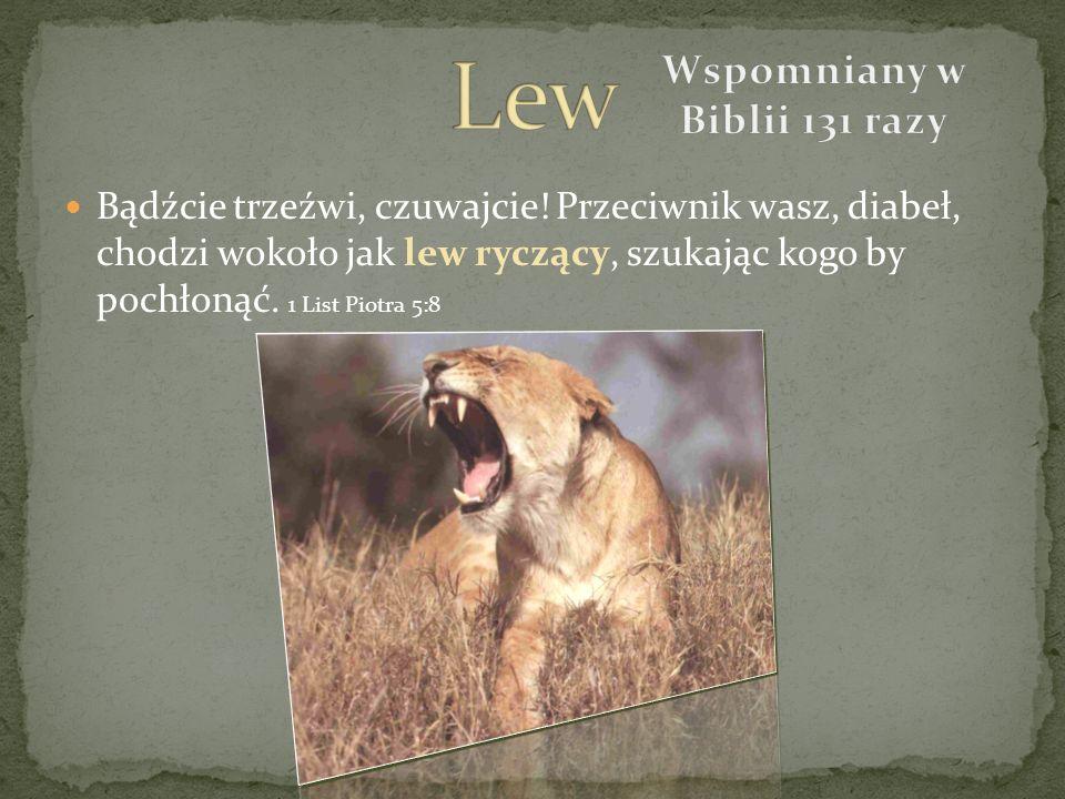 Bądźcie trzeźwi, czuwajcie! Przeciwnik wasz, diabeł, chodzi wokoło jak lew ryczący, szukając kogo by pochłonąć. 1 List Piotra 5:8