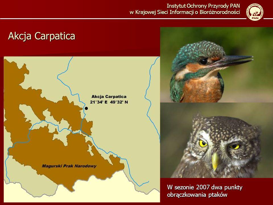 Instytut Ochrony Przyrody PAN w Krajowej Sieci Informacji o Bioróżnorodności Akcja Carpatica W sezonie 2007 dwa punkty obrączkowania ptaków