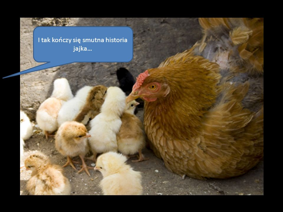I tak kończy się smutna historia jajka…