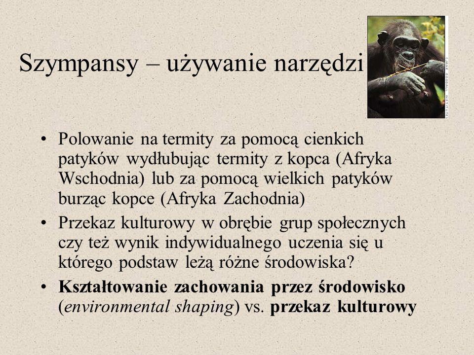 Szympansy – używanie narzędzi Polowanie na termity za pomocą cienkich patyków wydłubując termity z kopca (Afryka Wschodnia) lub za pomocą wielkich pat