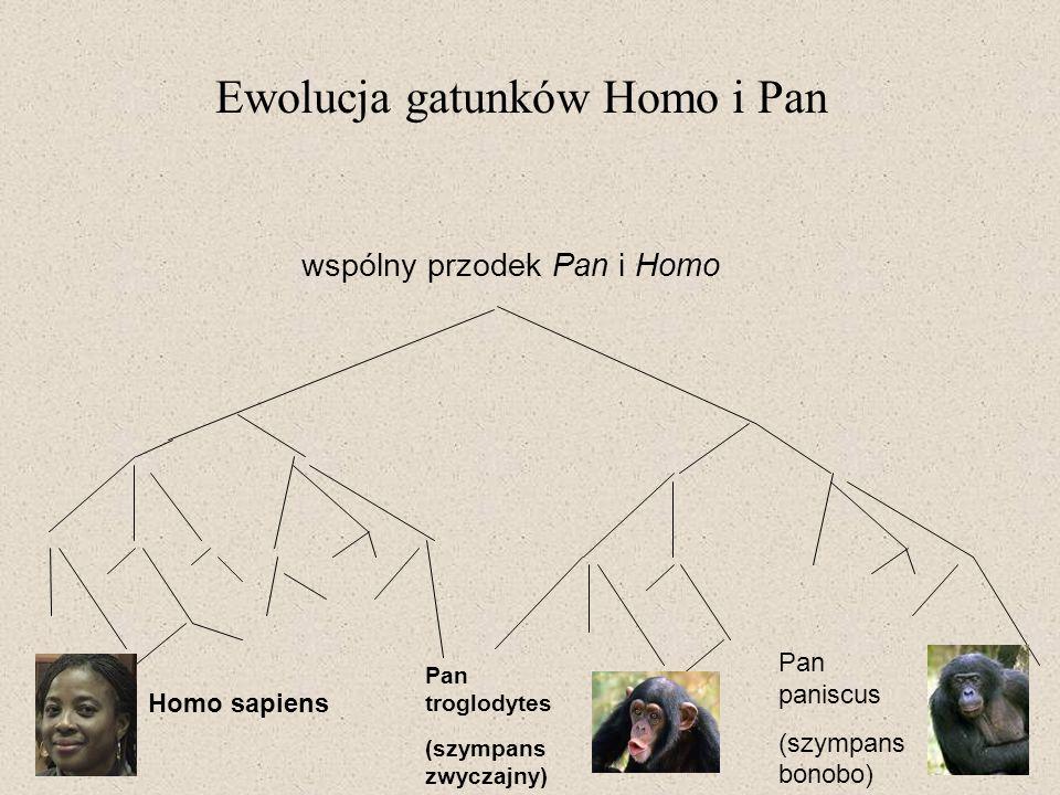 Pan troglodytes (szympans zwyczajny) Pan paniscus (szympans bonobo) Homo sapiens wspólny przodek Pan i Homo Ewolucja gatunków Homo i Pan