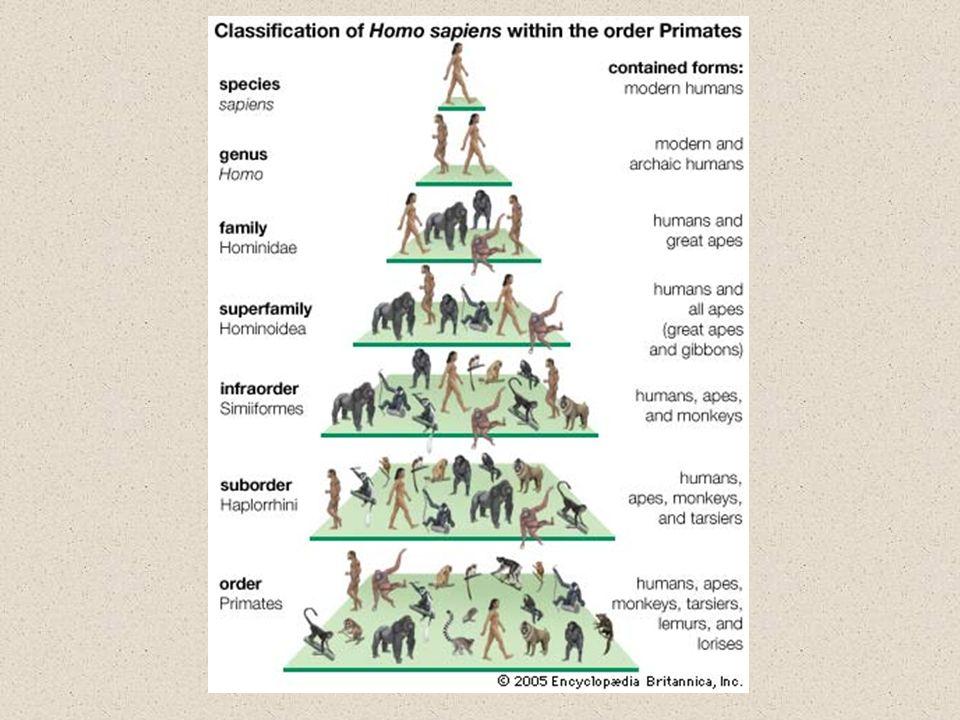 Uczenie przez emulację – koncentruje się na zmianach stanu środowiska spowodowanych przez innego osobnika (nie na samym zachowaniu czy strategii zachowania)