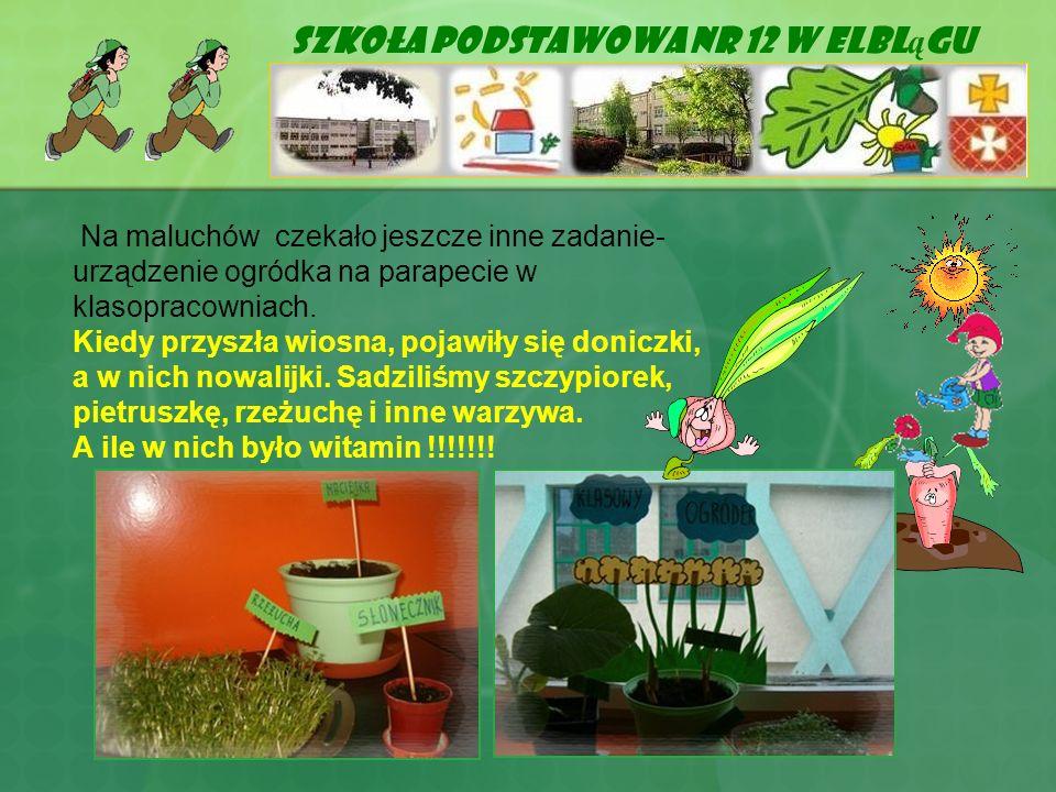 Szkoła Podstawowa Nr 12 w Elbl ą gu Na maluchów czekało jeszcze inne zadanie- urządzenie ogródka na parapecie w klasopracowniach. Kiedy przyszła wiosn