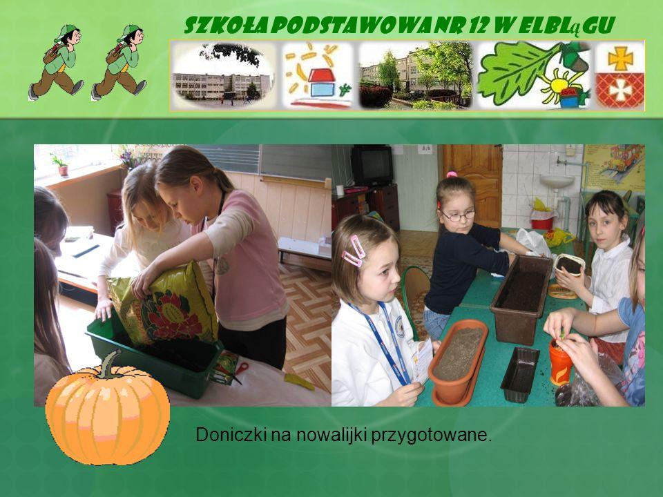 Szkoła Podstawowa Nr 12 w Elbl ą gu Doniczki na nowalijki przygotowane.