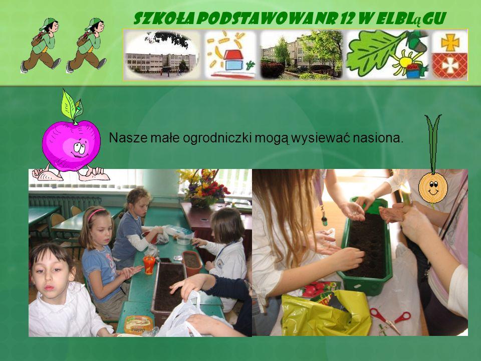 Szkoła Podstawowa Nr 12 w Elbl ą gu Nasze małe ogrodniczki mogą wysiewać nasiona.