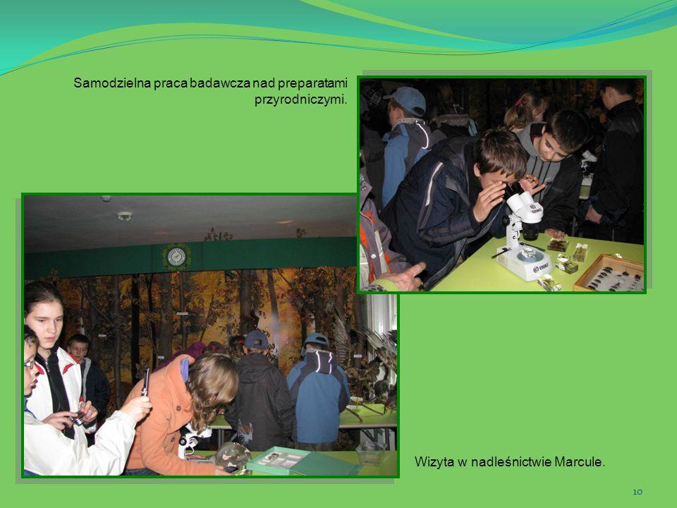 10 Wizyta w nadleśnictwie Marcule. Samodzielna praca badawcza nad preparatami przyrodniczymi.