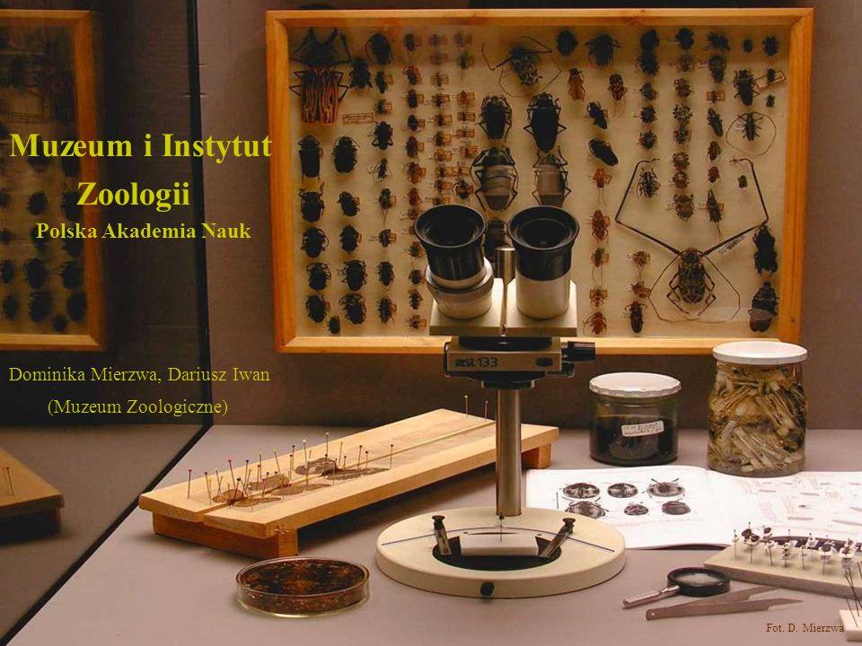 Muzeum i Instytut Zoologii Polska Akademia Nauk Fot. D. Mierzwa Dominika Mierzwa, Dariusz Iwan (Muzeum Zoologiczne)