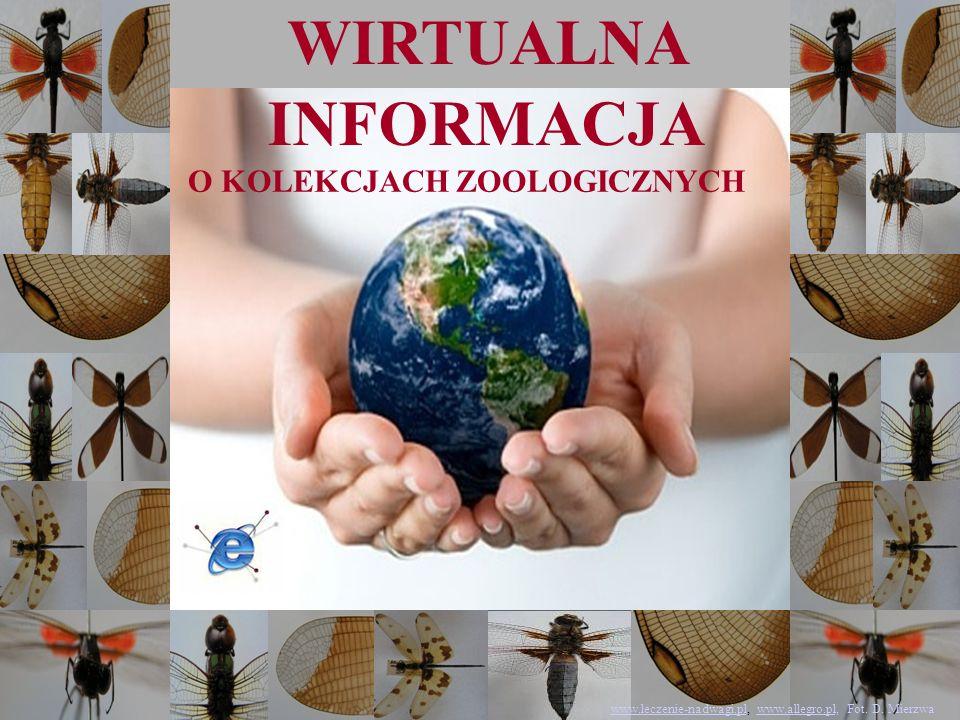 WIRTUALNA INFORMACJA O KOLEKCJACH ZOOLOGICZNYCH www.leczenie-nadwagi.plwww.leczenie-nadwagi.pl, www.allegro.pl, Fot. D. Mierzwawww.allegro.pl