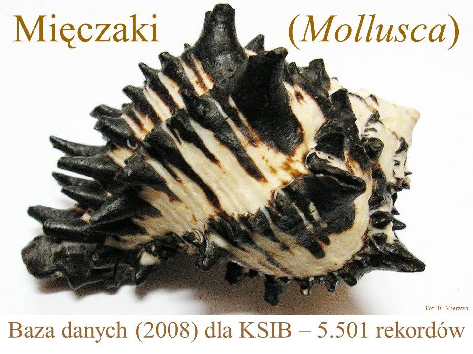 Mięczaki (Mollusca) Baza danych (2008) dla KSIB – 5.501 rekordów Fot. D. Mierzwa