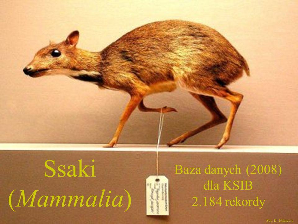 Ssaki (Mammalia) Baza danych (2008) dla KSIB 2.184 rekordy Fot. D. Mierzwa
