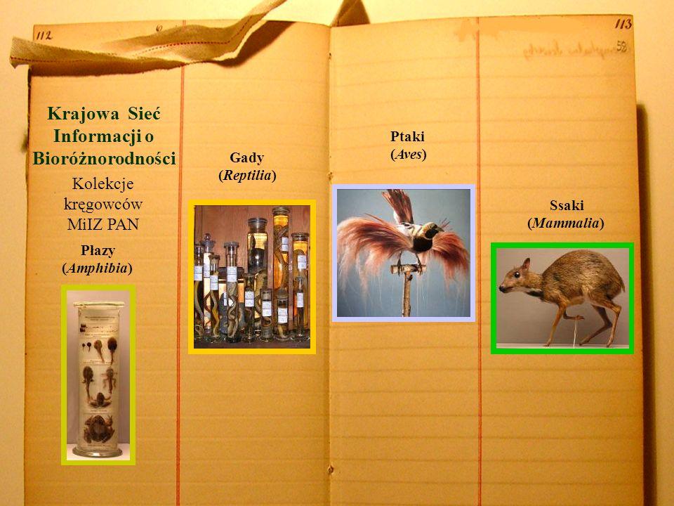 Krajowa Sieć Informacji o Bioróżnorodności Płazy (Amphibia) Gady (Reptilia) Ptaki (Aves) Kolekcje kręgowców MiIZ PAN Ssaki (Mammalia)