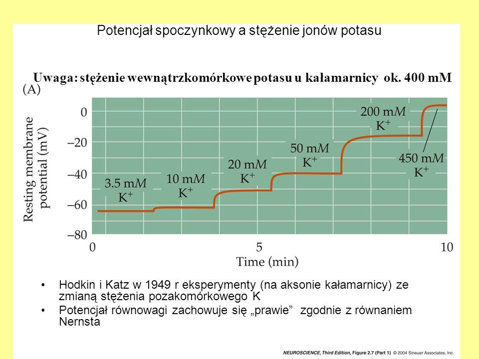 Potencjał spoczynkowy a stężenie jonów potasu Hodkin i Katz w 1949 r eksperymenty (na aksonie kałamarnicy) ze zmianą stężenia pozakomórkowego K Potenc