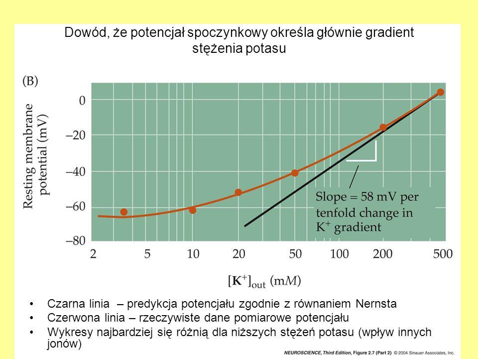 Dowód, że potencjał spoczynkowy określa głównie gradient stężenia potasu Czarna linia – predykcja potencjału zgodnie z równaniem Nernsta Czerwona lini