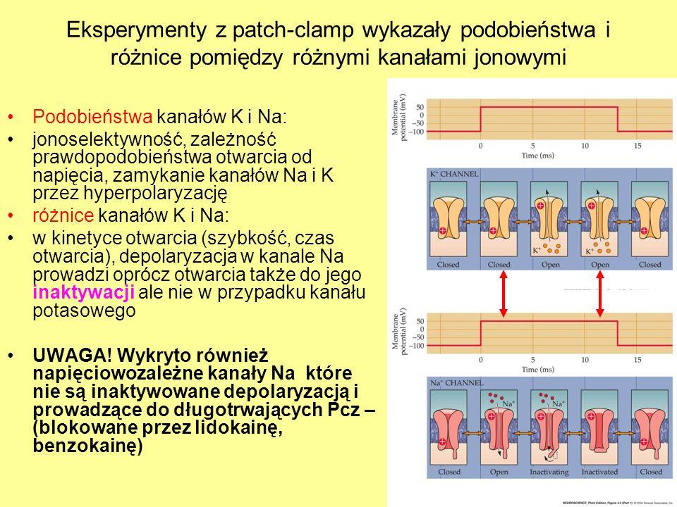 Eksperymenty z patch-clamp wykazały podobieństwa i różnice pomiędzy różnymi kanałami jonowymi Podobieństwa kanałów K i Na: jonoselektywność, zależność