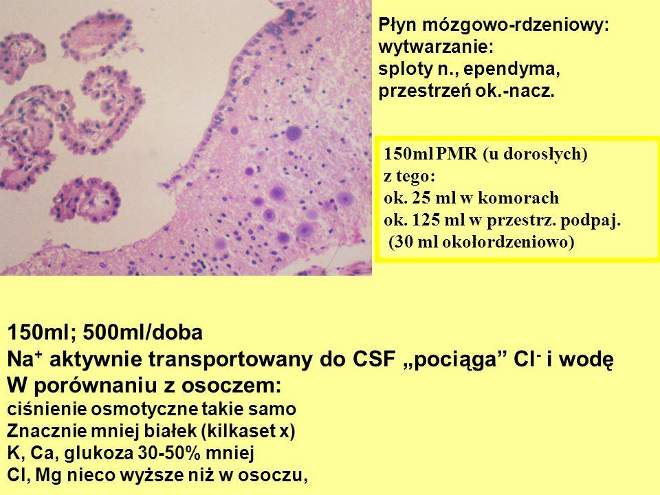 Płyn mózgowo-rdzeniowy: wytwarzanie: sploty n., ependyma, przestrzeń ok.-nacz. 150ml; 500ml/doba Na + aktywnie transportowany do CSF pociąga Cl - i wo