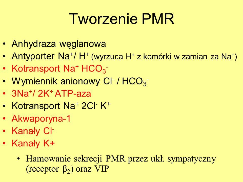 Tworzenie PMR Anhydraza węglanowa Antyporter Na + / H + (wyrzuca H + z komórki w zamian za Na + ) Kotransport Na + HCO 3 - Wymiennik anionowy Cl - / H