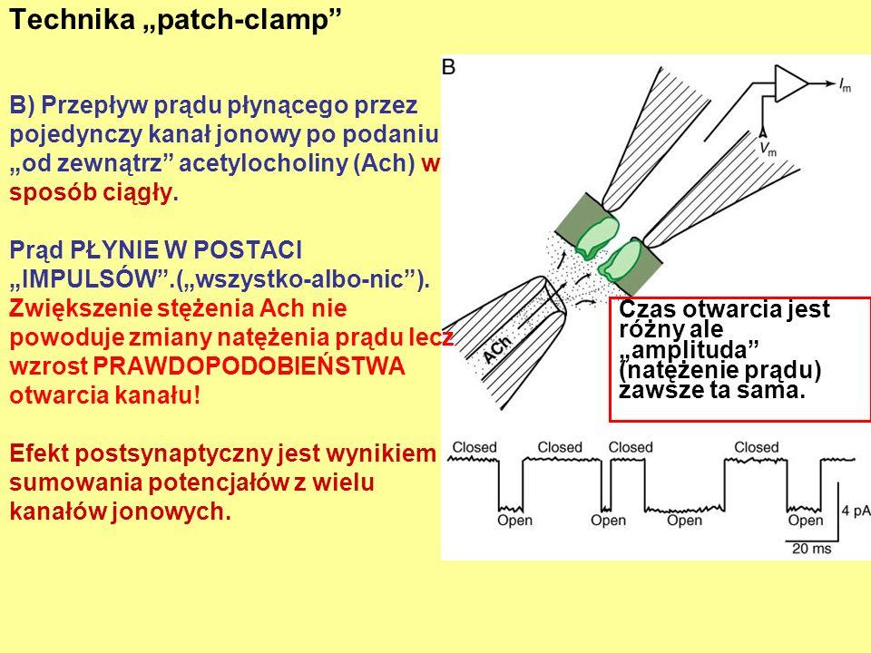 Technika patch-clamp Czas otwarcia jest różny ale amplituda (natężenie prądu) zawsze ta sama. B) Przepływ prądu płynącego przez pojedynczy kanał jonow