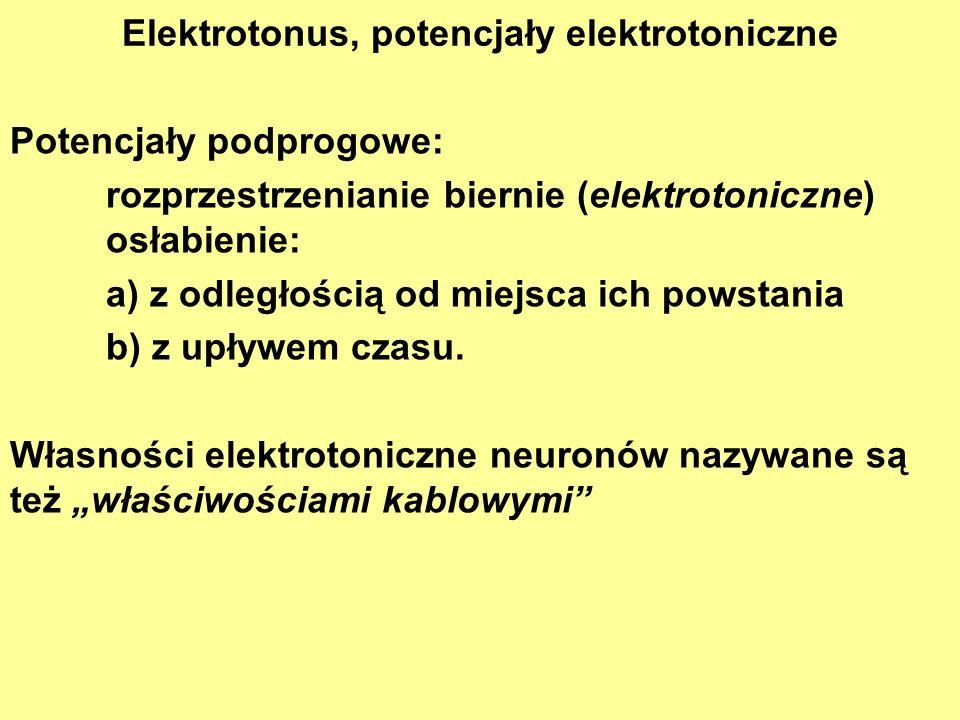 Elektrotonus, potencjały elektrotoniczne Potencjały podprogowe: rozprzestrzenianie biernie (elektrotoniczne) osłabienie: a) z odległością od miejsca i