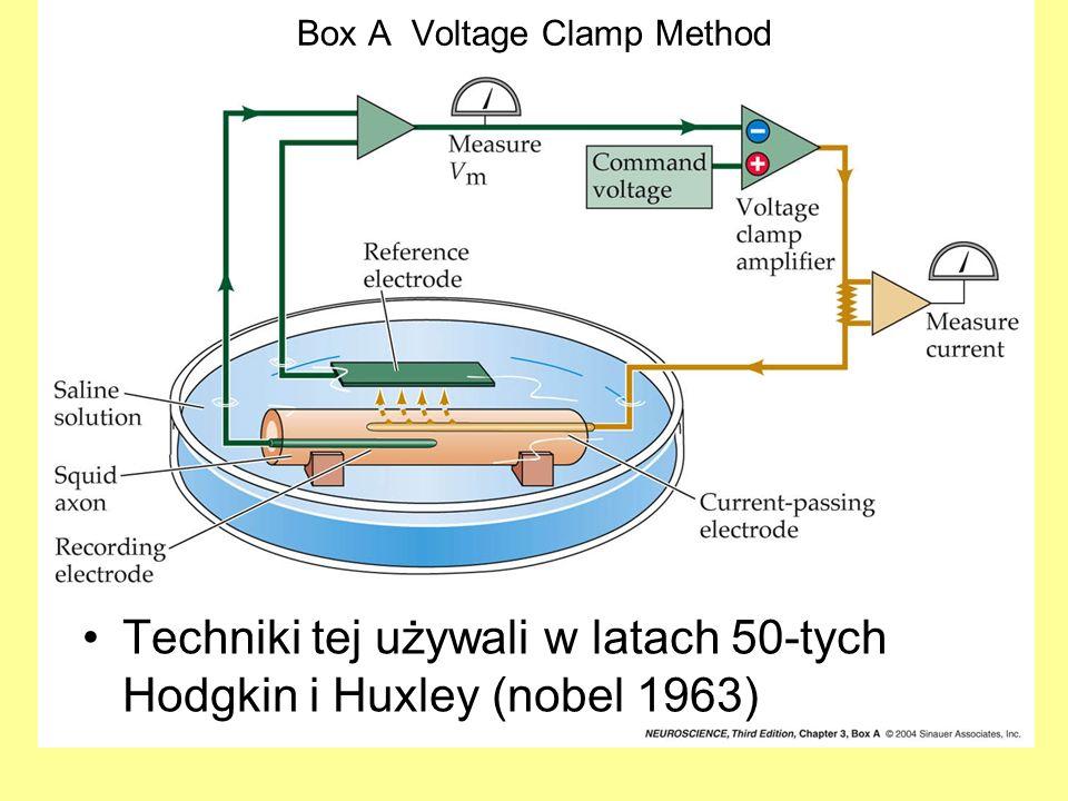 Technika patch-clamp Czas otwarcia jest różny ale amplituda (natężenie prądu) zawsze ta sama.