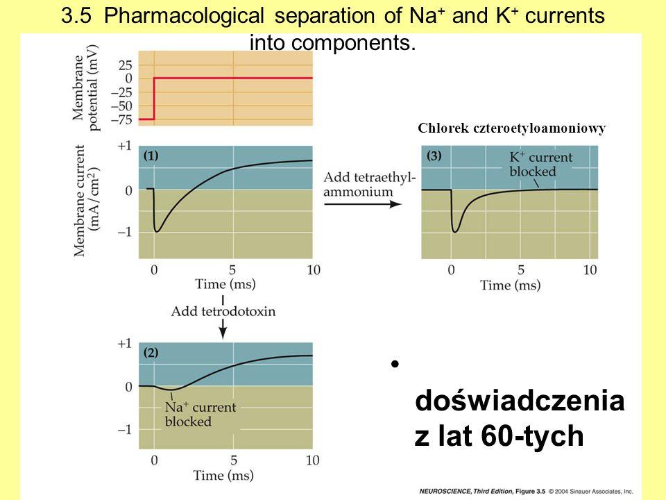 3.5 Pharmacological separation of Na + and K + currents into components. doświadczenia z lat 60-tych Chlorek czteroetyloamoniowy