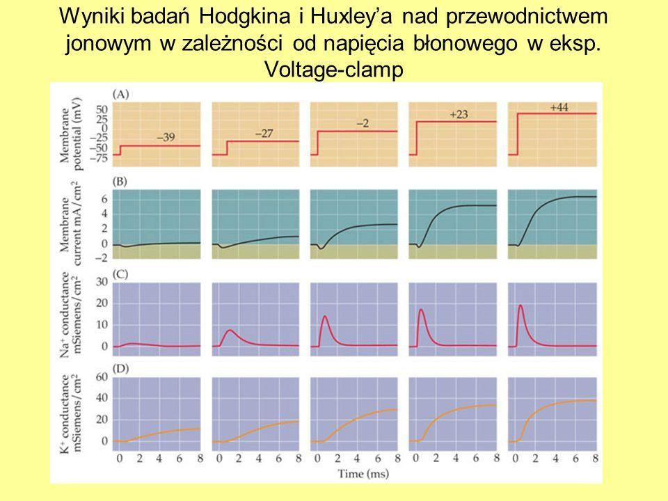 Technika patch-clamp kanałem receptorowym: podawanie N-T przy zmienianych wartościach potencjału stabilizowanego napięcia oraz zmienianych stężeń jonów: wnioski: 1) Po związaniu z NT częstotliwość i średni czas otwarcia kanału są niezależne od napięcia 2) Kierunek i amplituda prądu zależy od napięcia.