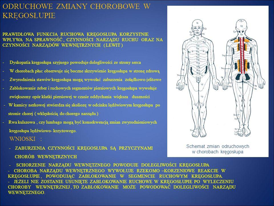 REFLEKSOTERAPIA - ZARYS W wyniku ucisku na nerwy odchodzące od rdzenia, przez element przesuniętego kręgu, dochodzi do dysfunkcji tkanki miękkiej lub